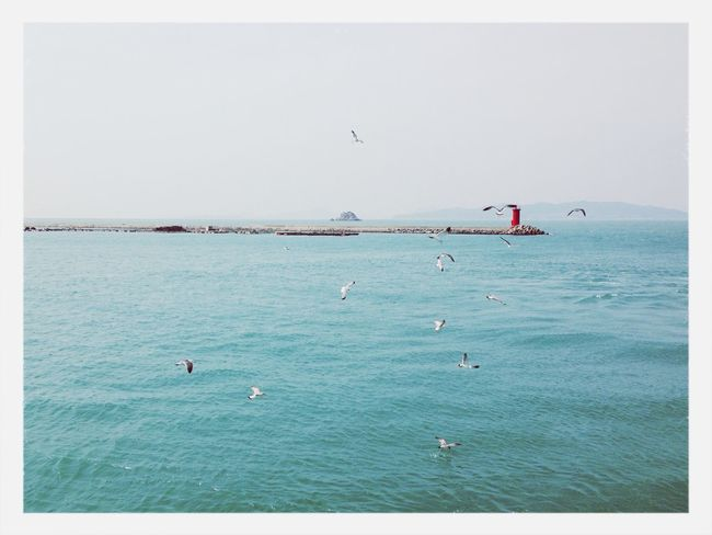 청산도좋아요 Traveling Sea Good Times Seagull