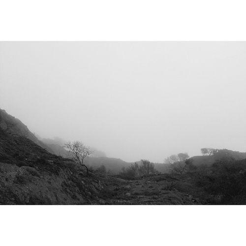 Coastal fog. Sanfrancisco Vscocam VSCO Karlthefog