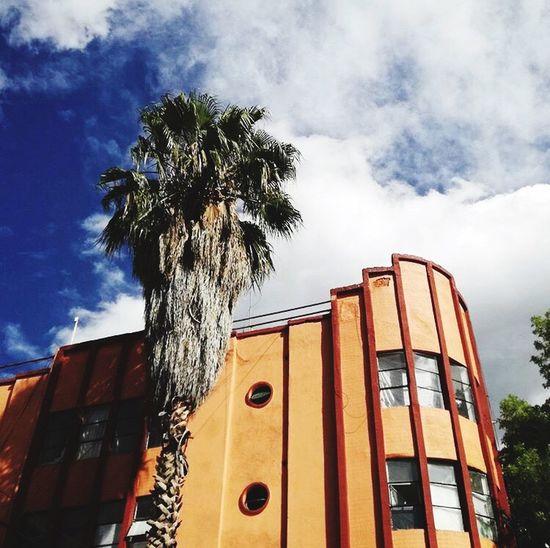 Mexico City Palm Tree Sunnyday☀️ First Eyeem Photo