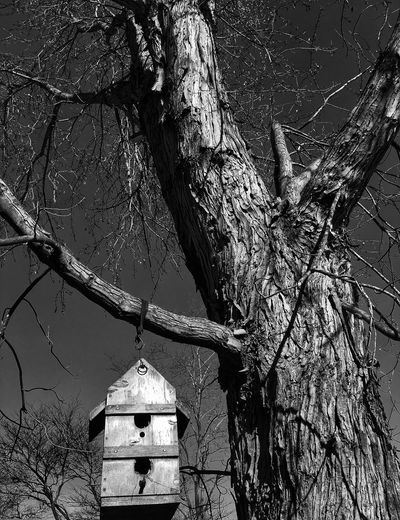 Birdhouse Blackandwhite Bare Tree Tree Branch No People Outdoors Low Angle View Tree Trunk Nature Day Beauty In Nature Sky
