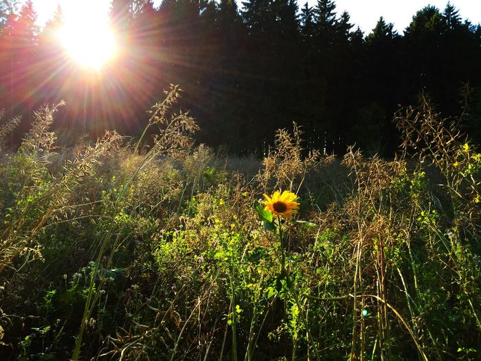 Last greetings from summer. Fall Beauty Nature Natural Natural Beauty Fichtelgebirge