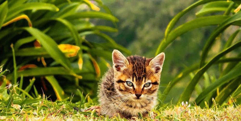 Azores Portugal Stray Kitty Pets Corner