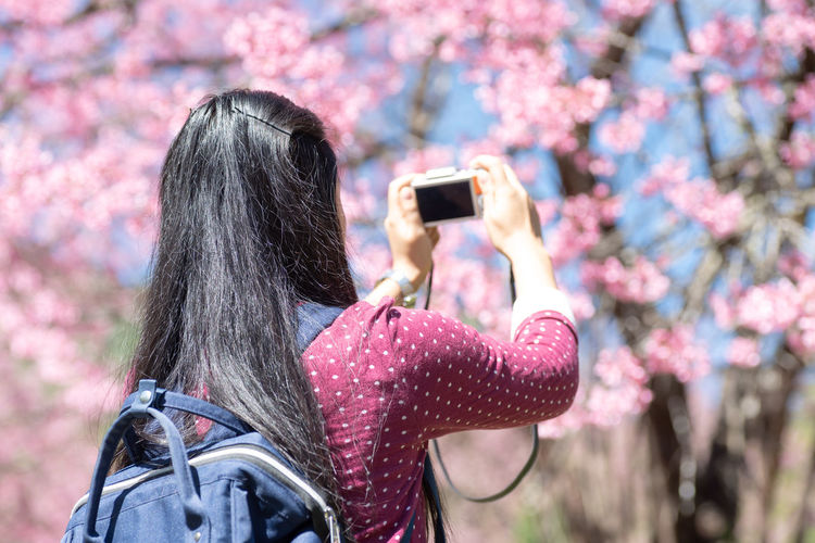Woman taking photo of cherry blossom Springtime Outdoors Tree Nature Portrait Rear View Pink Color One Person Photography Themes Holding Photographing Cherry Blossom Pink Flower Chiang Mai | Thailand Taking Photos Camera Woman Travel Traveling Traveler Photography Photographer ASIA