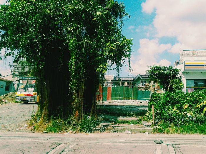 Vscocam Nature Treepower EyeEm Nature Lover