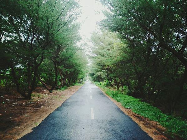 berjalan Lurus Tree The Way Forward Nature Day Outdoors Road No People