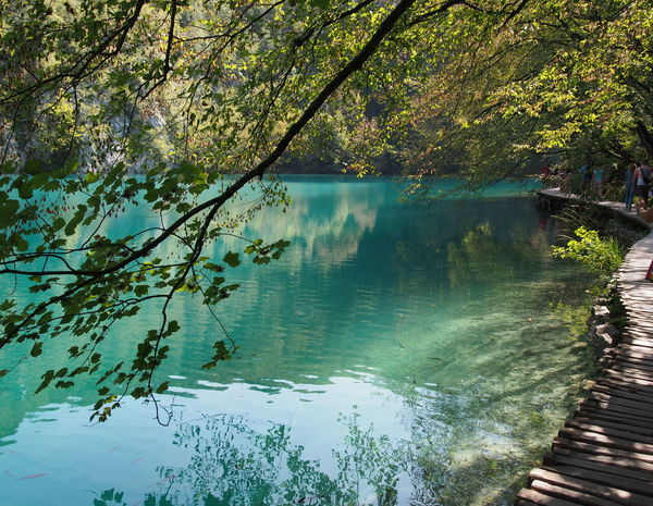 Beauty In Nature Blue Green  Branch Croatia Day Forest Lake Nature Non-urban Scene Outdoors Plitvice Lakes National Park Plitvice National Park Reflection Scenics Tranquil Scene Tranquility Tree Water EyeEmNewHere The Secret Spaces The Great Outdoors - 2017 EyeEm Awards Live For The Story