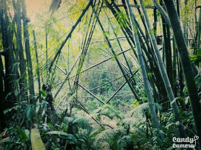 @ Sreemangal, Lauwaachora Forest First Eyeem Photo