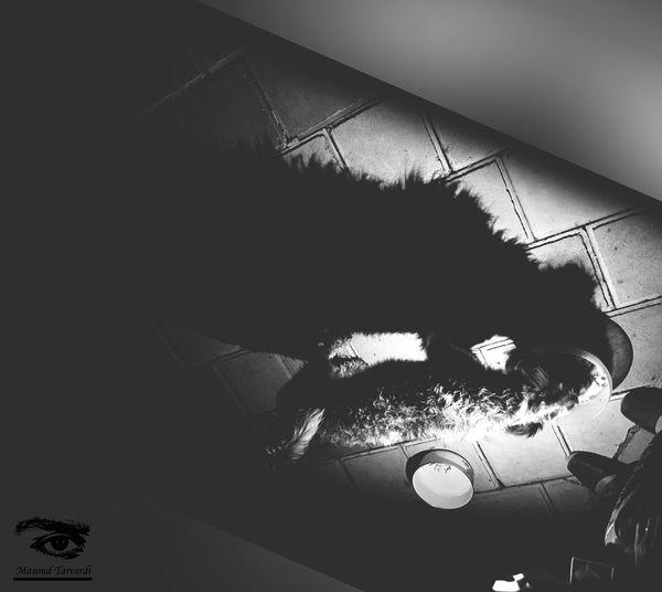 مسعود مسعود_تاروردی مسعودتاروردی عکاسی عکس سگ سایه انتزاع تاروردی سیاه_سفید Masoud Masoudtarverdi Masoud_tarverdi Tarverdi Photography Photo Black & White Dog Dogs