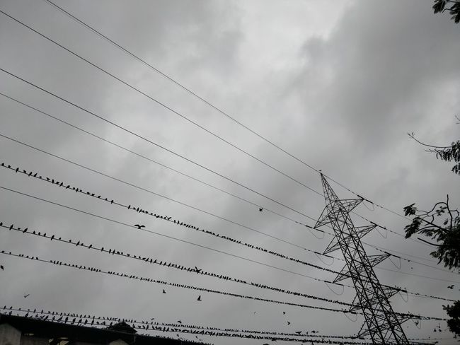 Architecture Built Structure Cable Cloud - Sky Complexity Connection Day Electricity  Electricity Pylon Flock Of Birds Fuel And Power Generation Low Angle View Nature No People Outdoors Overcast Power Line  Power Supply Sky Technology