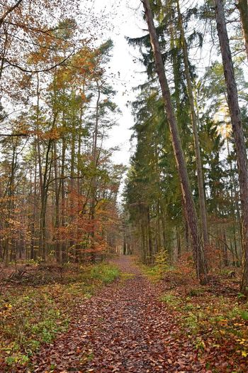 Nature Photography Weg Zum Bogensee Autumn Beauty In Nature Bogensee Branch Change Day Forest Growth Landscape Leaf Nature Nature_collection Naturelovers No People Outdoors Scenics Sky The Way Forward Tranquil Scene Tranquility Tree Tree Trunk WoodLand