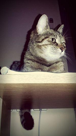 Megfigyelő poszt Guard Guardpost Catguard Cat Cat Lovers Cat Watching