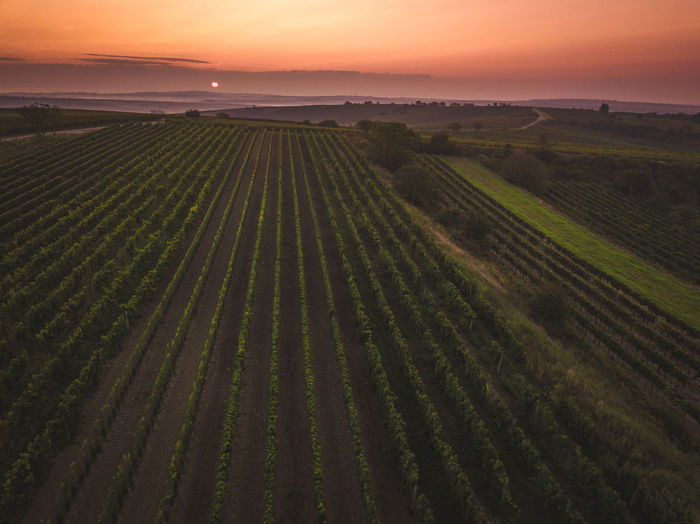 Scenic view of agricultural field during sunset