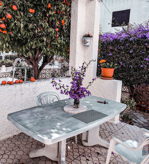 A table under orange tree Bougainvillea Orange Tree Springtime Mediterranean  Garden Bouquet Flower Arrangement Table Chairs Silver Colored Living Gardening Flowerpots Flower Table Blooming Flower Head Petal Whitewashed In Bloom Purple Plant Life Fragility