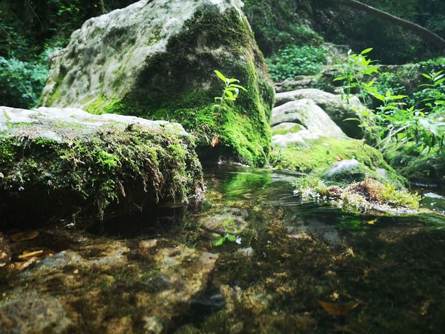 Water Moss Waterfall Algae Long Exposure Stream - Flowing Water Falling Water Stream Flowing Water Seaweed Fern