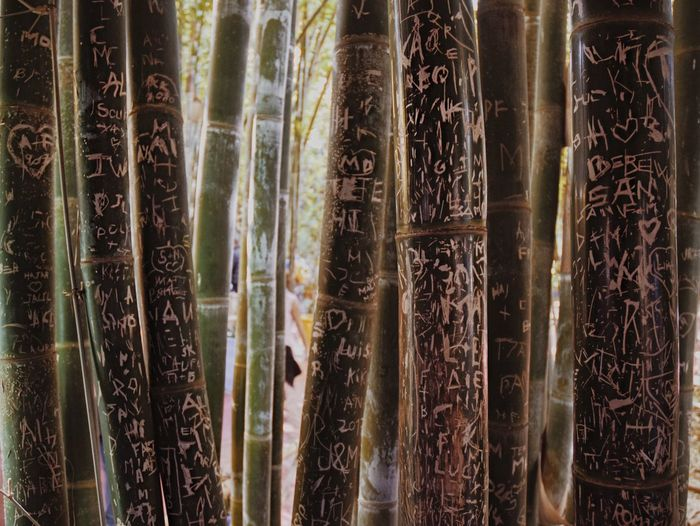 Full frame shot of bamboo plants in forest