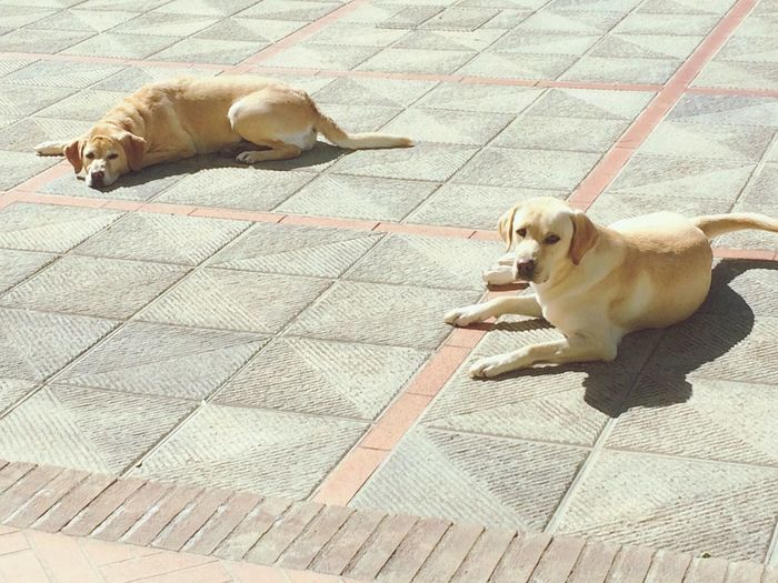 Tara e Maya!! Domestic Animals Pets Dog Togetherness Resting