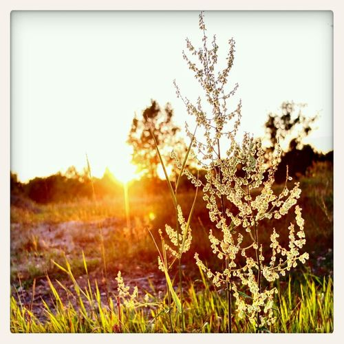 see kitsch Sunset