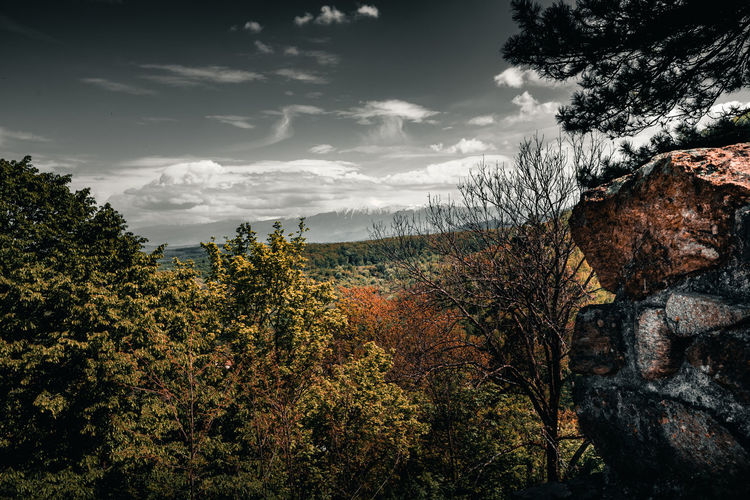 Clash Of Elements Tree Plant Sky Cloud - Sky Nature Beauty In Nature Scenics - Nature Tranquility Tranquil Scene Growth No People Non-urban Scene Environment Outdoors Land Day Idyllic Autumn Forest Change Castle Fortress Wall Old History Vintage Sibiu Romania Europe Green Color Woods Mountain Range Oudoors EyeEm Best Shots EyeEmNewHere EyeEm Selects EyeEm Nature Lover EyeEm Gallery Destination Explore Discover  Travel
