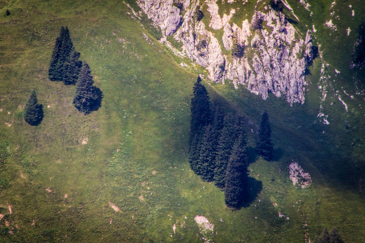 Aerial view of trees and rock formation on mountain