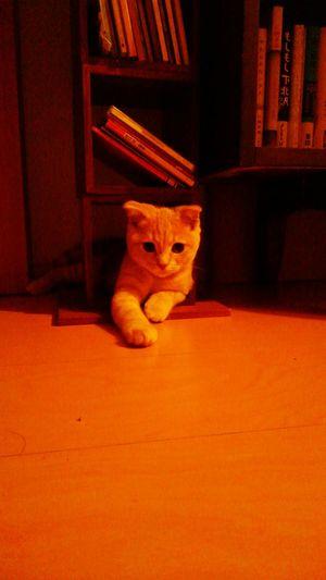 かわいいやつめ! Cat My Cat Hello World とっちゃん