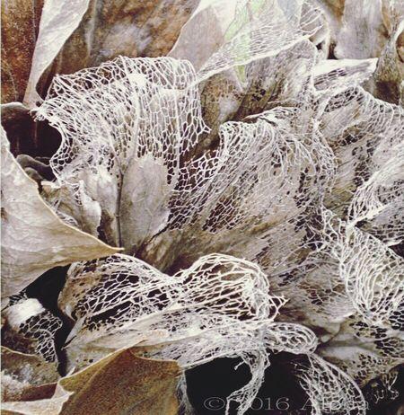 自然 草 枯れ草 アート 植物 ガーデニング Dead Plant Dead Plants Dried Plant Nature ArtWork Art Artistic Art With Plants Leaf Leaf Veins Leaf Vein 葉脈
