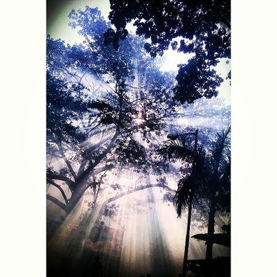 Rsa_sunset Repostingindia Tr_colors Ig_india ic_nature india_gram phototag_sunset pixaffair mumbai_in_clicks my_mumbai md_skyline nature_sultans nature naturehippys_ nature_skyshotz bestnatureshot_nature bns_sunset bestnatureshot_trees bombayflare color_n_nature cool_sunshotz club_nature shot_flair splendid_shotz sunset_clicks sunset_madness sunset_pics_ sky_sultans