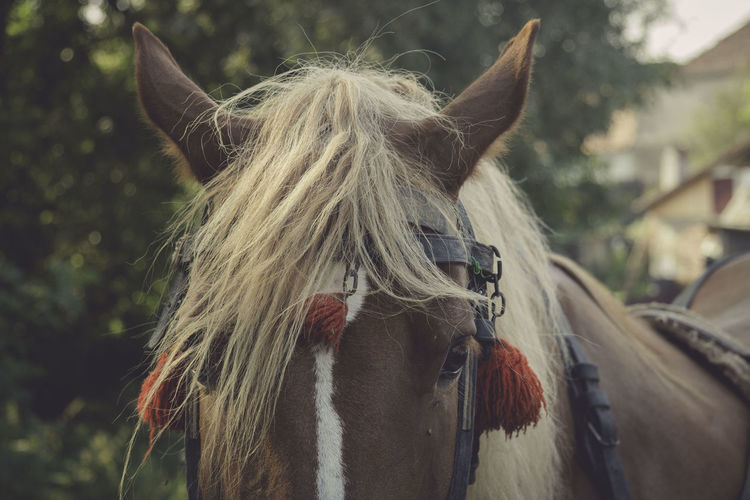 Animal Hair Beauty In Nature Close-up Domestic Animals Focus On Foreground Headshot Horse Horses Long Hair Mammal Mane One Animal Outdoors Straight Hair Tranquility Transylvania