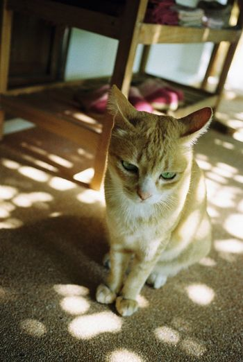 Chiang Mai | Thailand Hoshihana Village Travel Photography Cat Film Photography Filmisnotdead 35mm Film Filmcamera Contaxt3
