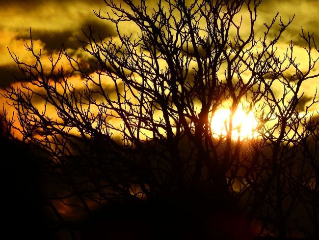 Sunset Silhouette Tree Landscape Textures Of Light Sunlight Nature Beauty In Nature Outdoors View Silhouette Collection Light And Shadow No People Sun Golden Shining Light So Beautiful  Eyem Market