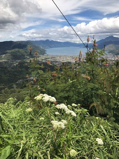 What A Beautiful Place with the clear blue sky and fresh air. I'm in love for this place. A Place By ITag View By ITag Takengon (22.09.17) By ITag Nature By ITag