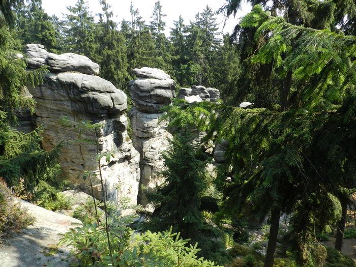 Czech Mountains Nature Stone Sightsee Rocks Forest Czech Republic Tree Landscape Steny Woods Rock