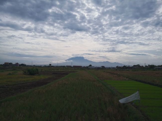 Mountain over padi field Irrigation Equipment Mountain Rural Scene Rice Paddy Agriculture Field Social Issues Tea Crop Tree Farm Valley Plantation Rice - Cereal Plant Agricultural Field