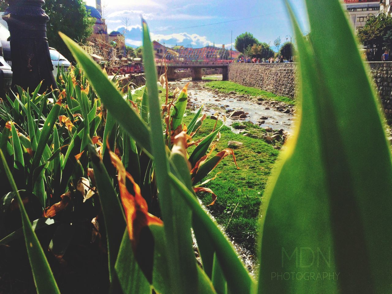 growth, field, no people, green color, day, grass, outdoors, plant, architecture, nature, sky, close-up