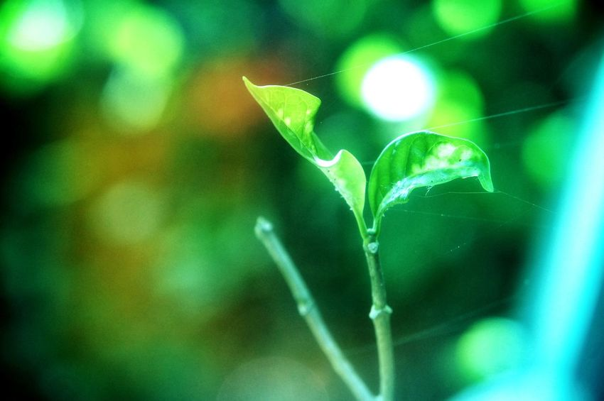Makro Photography SuperMacro Leaf Green Color Green Leaves Bokeh Photography Superbokeh