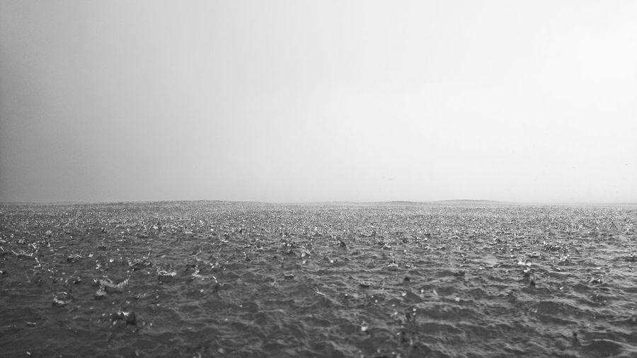 rain - bw Water