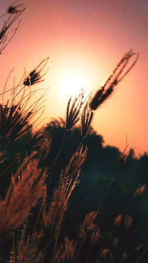 Sunrise Calm Morning Plants 🌱 Happy Saturday✨