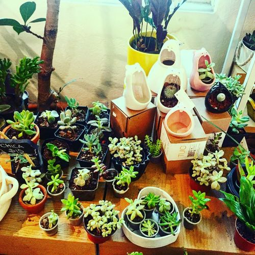 Urban Garden Succulents Green Comelones Tallerpacopadilla 🌱🎋🌿 Cdmx