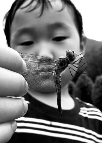Nature Dragonfly Bugs Insect Children Childhood Monochrome Blackandwhite Rain Rainy Days IPhoneography