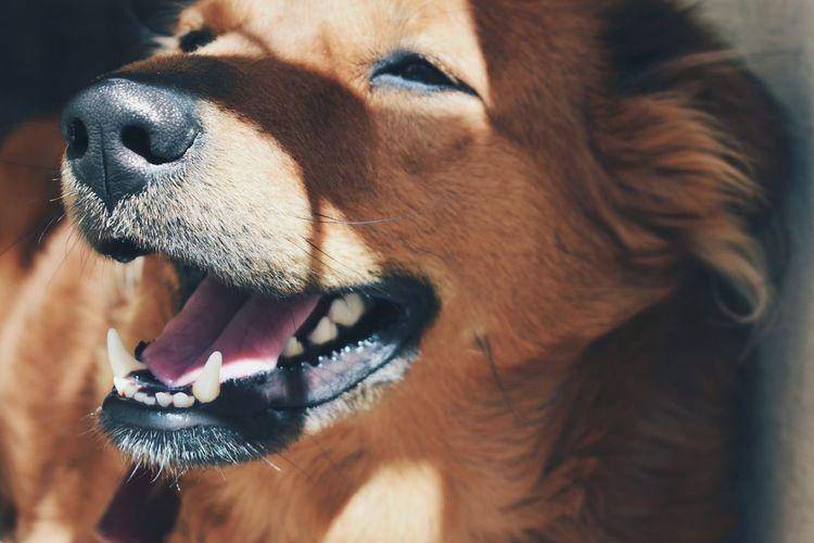 Dog Close-up Bozo  Shadows & Lights Lights Visualoflife EyeEmNewHere Pet Portraits