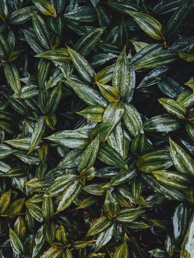 EyeEmNewHere Backgrounds Full Frame No People Plant Nature Close-up Growth Green Color Beauty In Nature Plant Part Leaf Outdoors Natural Pattern Herb Directly Above Pattern High Angle View