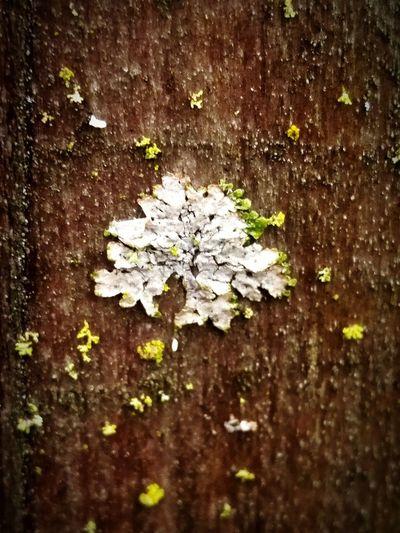 Lichen Or Not Moss Nature Green Treethugger Naturerocks
