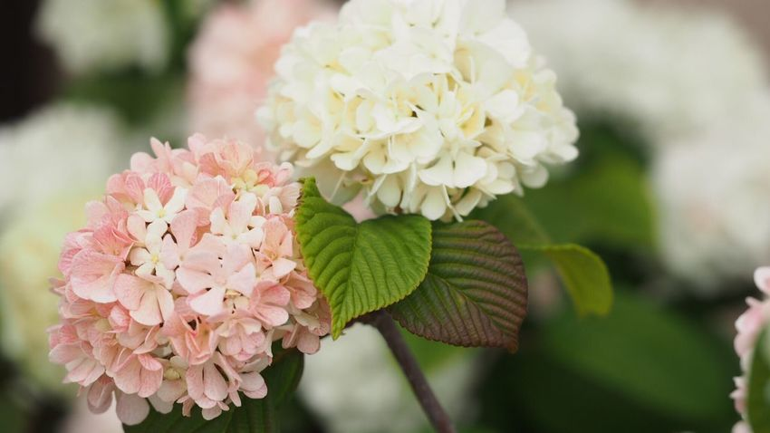 EyeEm Best Shots Flowerlovers Flower Photography EyeEm Nature Lover Pink White Flower White