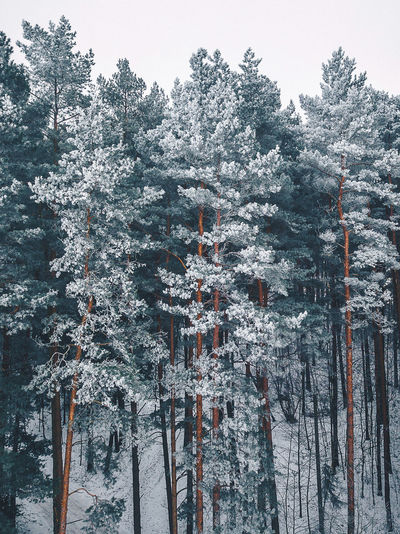 Frosty trees Trees Winter Beauty In Nature Branch Cold Cold Temperature Day Forest Frosty Mornings Frosty Trees Growth Nature No People Outdoors Scenics Sky Snow Tranquil Scene Tranquility Tree Weather White Winter