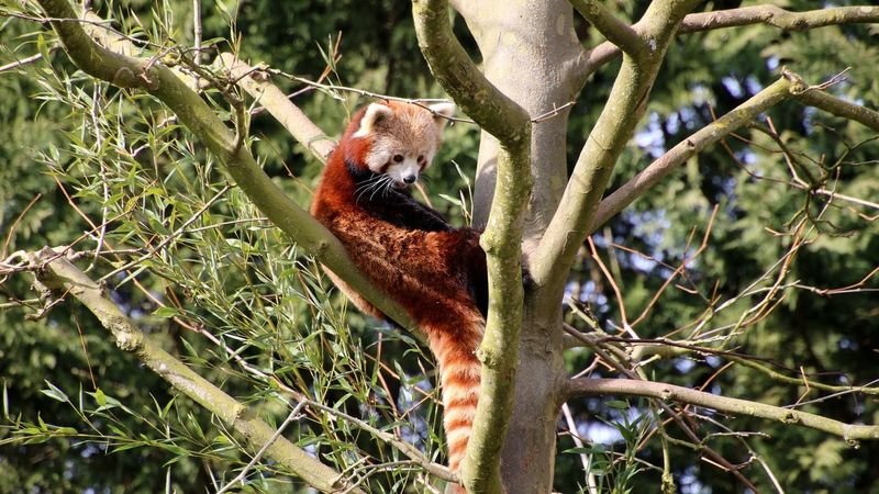 Pandaroux Animal Themes Animal Wildlife Outdoors First Eyeem Photo