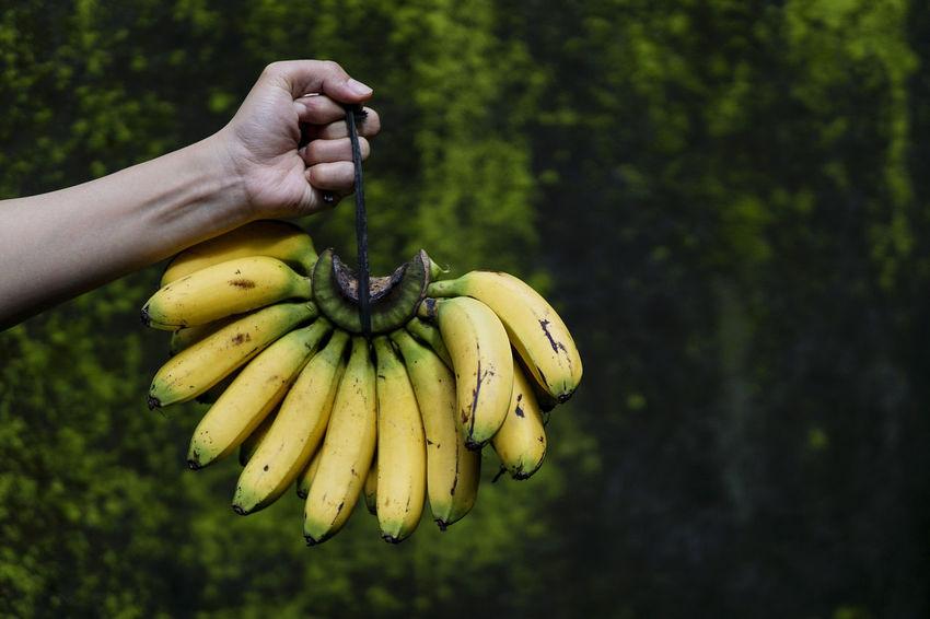 Banana Banana Bananas Bunch Eating Food Food And Drink Freshness Fruit Healthy Eating Vitamin
