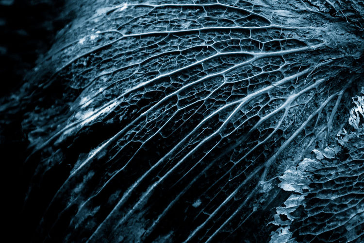 Backgrounds Black Background Close-up Day Freshness Full Frame Indoors  Nature No People Pattern Textured  Water