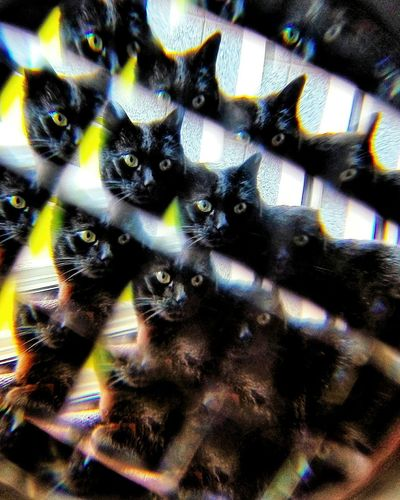 Cat BLackCat BombayCat Fun Caleidoscope Backgrounds Full Frame Pattern Close-up