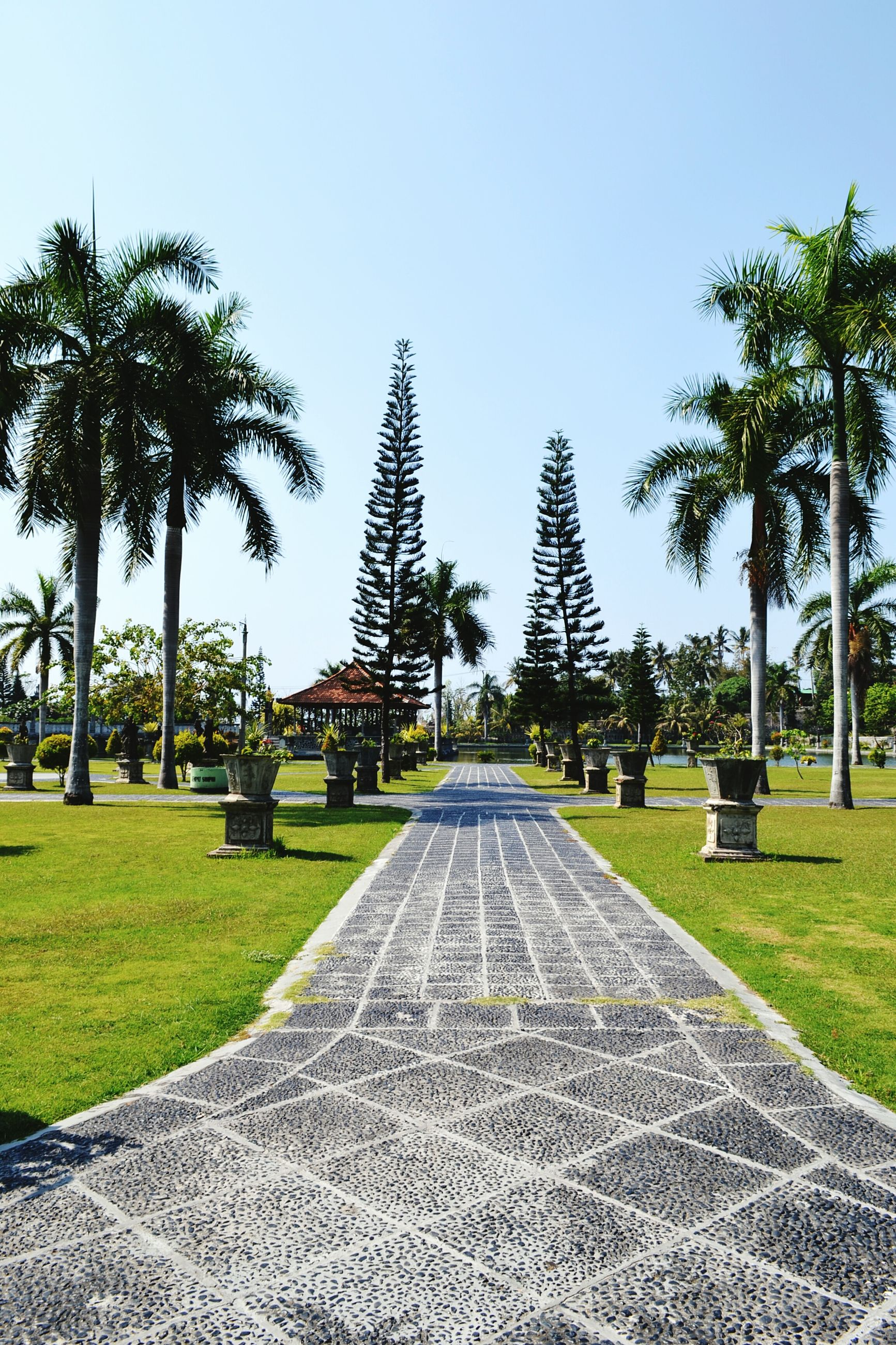 tree, grass, clear sky, park - man made space, the way forward, diminishing perspective, palm tree, green color, treelined, growth, sunlight, footpath, lawn, sky, blue, nature, vanishing point, tranquility, park, shadow