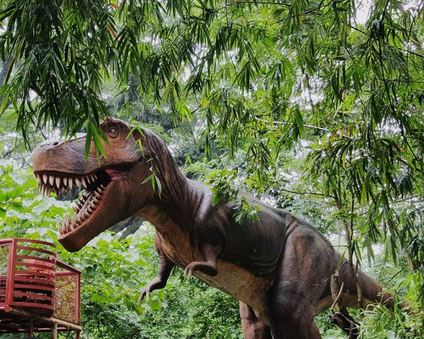 Tree Animal Themes Growth Outdoors Green Color Mammal Nature Zoo No People Beauty In Nature Tranquil Scene Tranquility Scenics Dinosaur Beware Warning Day MyfirstEyemphoto