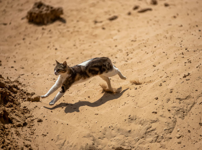 High angle view of a horse running on sand